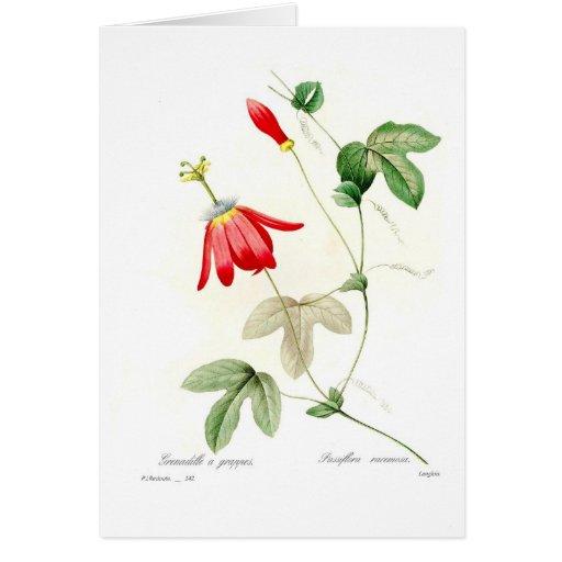 Passiflora racemosa greeting card