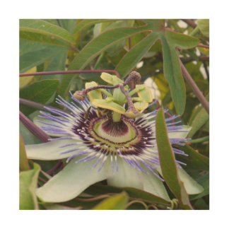 Passiflora Wood Canvas