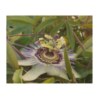 Passiflora Wood Canvases