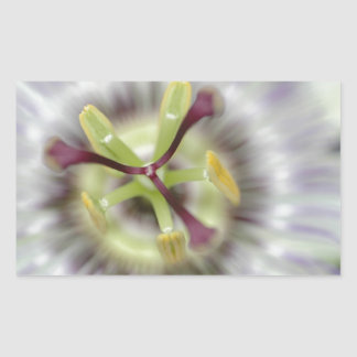 passion flower, from the flower gift collection rectangular sticker