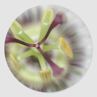 passion flower, from the flower gift collection round sticker