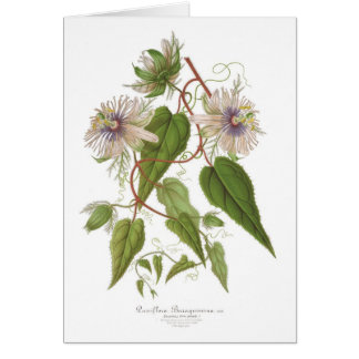 Passion flower greeting cards