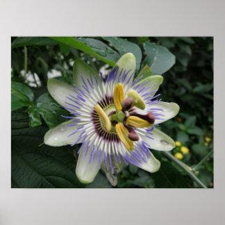 Passion Flower Macro Print