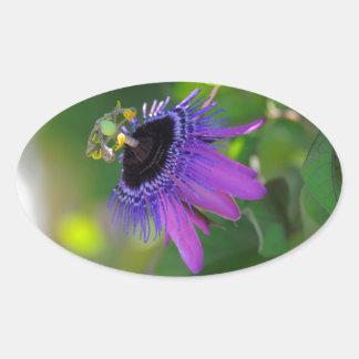 Passion flower (Passiflora) Oval Sticker