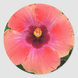 Passion Flower Pink Stickers