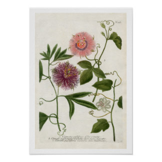 Passion Flower Print