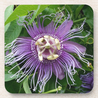 Passion Flower Purple and Green Beverage Coasters