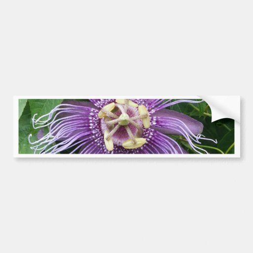 Passion Flower Purple and Green Bumper Sticker