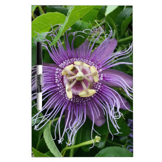 Passion Flower Purple and Green Dry-Erase Boards