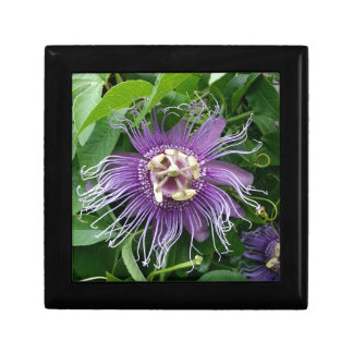 Passion Flower Purple and Green Gift Box