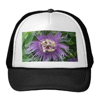 Passion Flower Purple and Green Mesh Hats