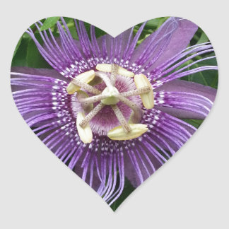 Passion Flower Purple and Green Heart Sticker