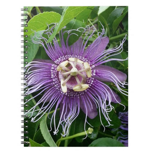 Passion Flower Purple and Green Spiral Notebooks