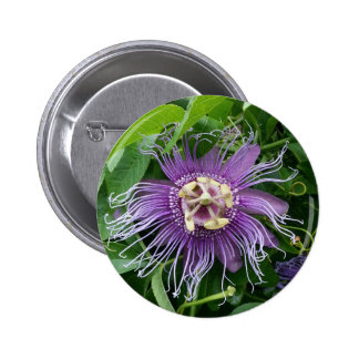 Passion Flower Purple and Green Pinback Buttons