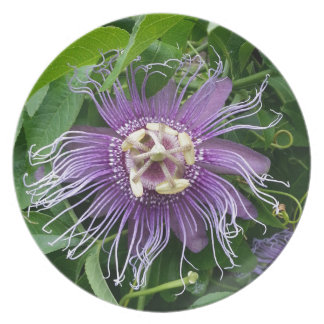 Passion Flower Purple and Green Party Plate