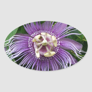 Passion Flower Purple and Green Sticker