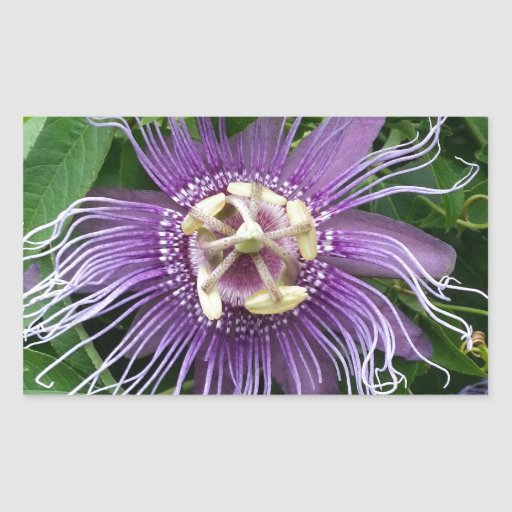 Passion Flower Purple and Green Rectangular Sticker