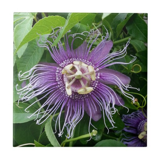 Passion Flower Purple and Green Tile