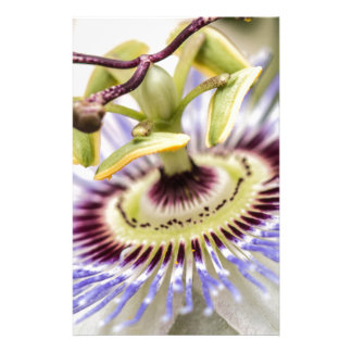 Passion Flower Stationery