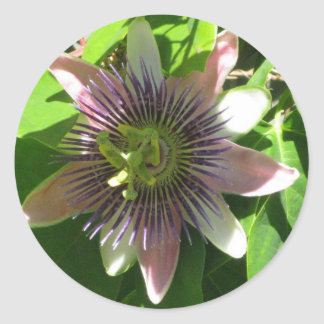 PASSION FLOWER STICKERS