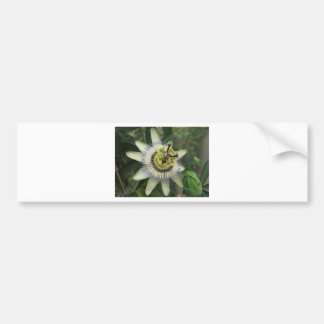 Passion Fruit Flower Bumper Sticker