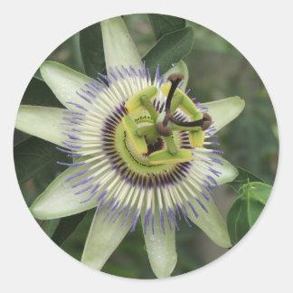Passion Fruit Flower Round Sticker