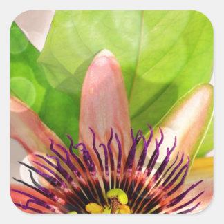 Passion Fruit Flower Square Sticker