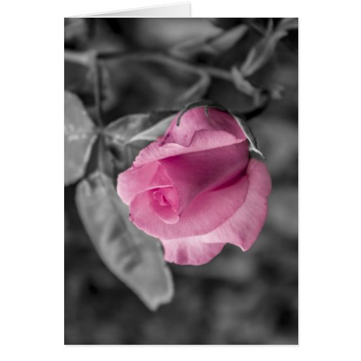 Passion pink card