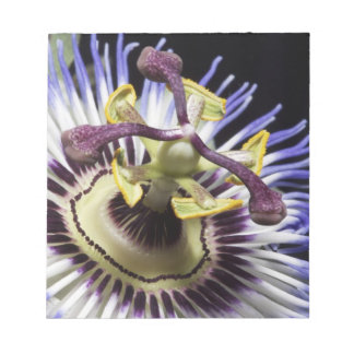 Passionflower close-up (MR) Notepad
