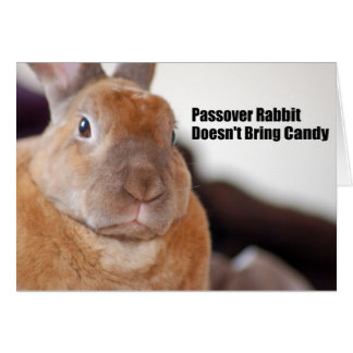 Passover Rabbit Says Greeting Card