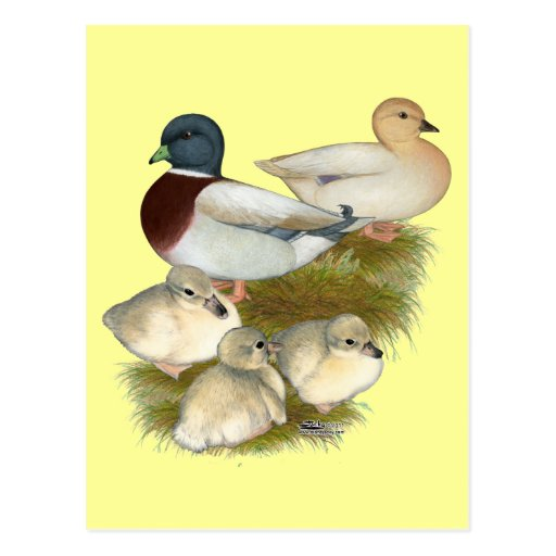 Pastel Call Duck Family Post Card