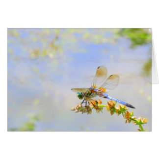 Pastel Dragonfly Note Card