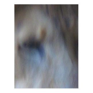 Pastel Lion Postcard