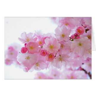 Pastel Pink Cherry Blossoms Greeting Card