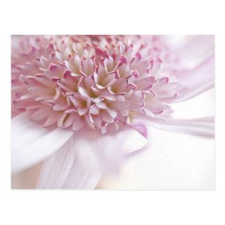 Pastel Pink Flower Postcard