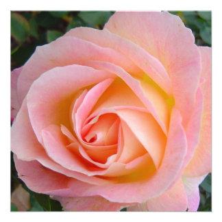 Pastel Rose Custom Invite