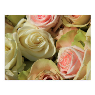 Pastel Roses by The Rose Garden Postcard