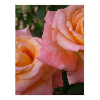 Pastel Roses  Postcard