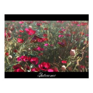 Pastures New Postcard