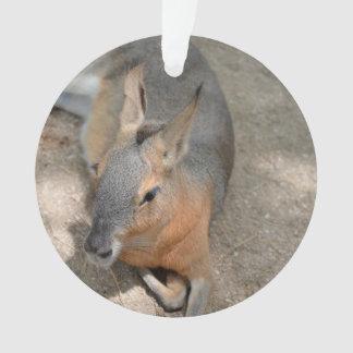 patagonian cavy animal resting animal ornament