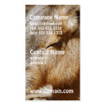 Patagonian Cavy Business Cards