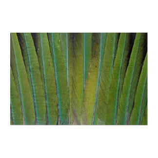 Patagonian Conure Feather Design Acrylic Wall Art