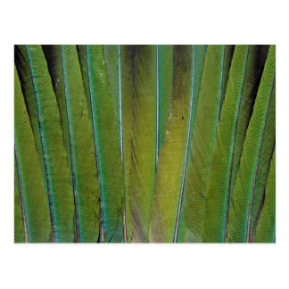Patagonian Conure Feather Design Postcard