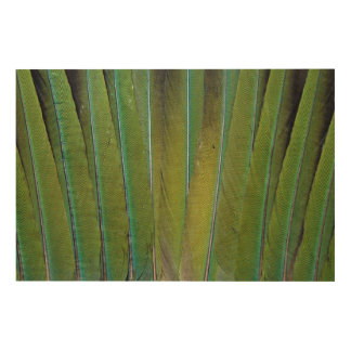 Patagonian Conure Feather Design Wood Wall Art
