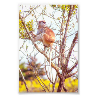 Patas is Up a Tree Photo Print