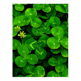 Patch O Clover Post Cards