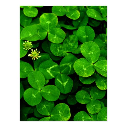 Patch O' Clover Post Cards