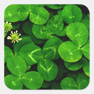 Patch O' Clover Square Sticker