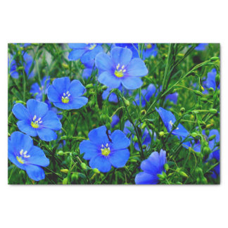 Patch of Blue Flax Linum Flowers-TISSUE WRAP PAPER