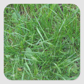 Patch of Grass Stickers